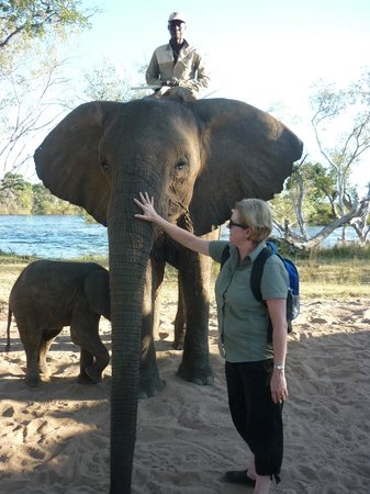 Safari Par Excellence - Elephant Encounter: Up close and personal