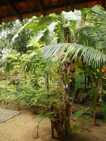 Dunes Unawatuna Hotel: Jardines enfrente de la cabaña