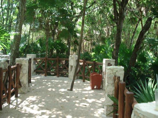 IBEROSTAR Paraiso Del Mar: camino hacia la playa