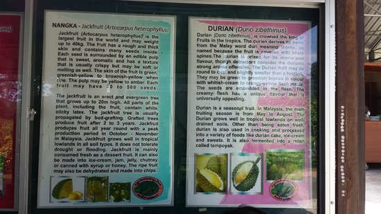 MARDI Langkawi Agro Technology Park : fruit info