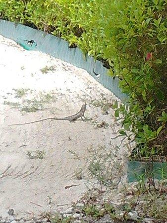 Bandos Maldives: view from room