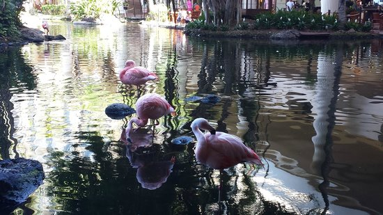 The Westin Maui Resort & Spa : Flamingos in the lobby