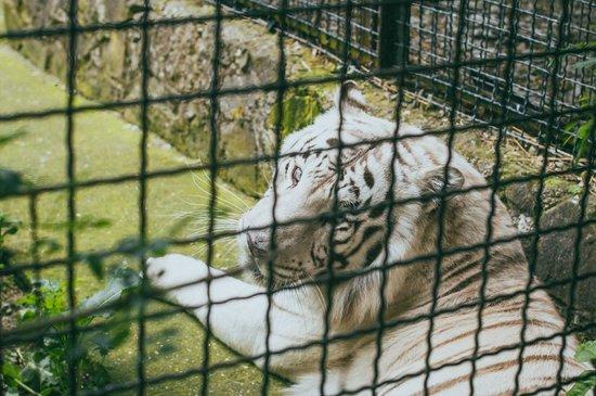 Skazka Zoo