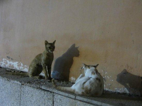 Balad : stray cats
