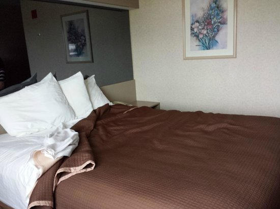 Howard Johnson Inn and Suites Elk Grove Village O'Hare: the bed