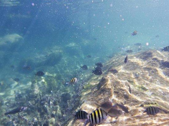 Edventure Tours: Yal Ku lagoon