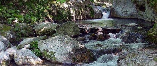 Valle delle Ferriere : incantevole particolare