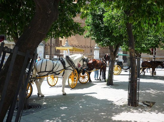 Hotel Dona Maria: Take a horse drawn carriage from outside the hotel