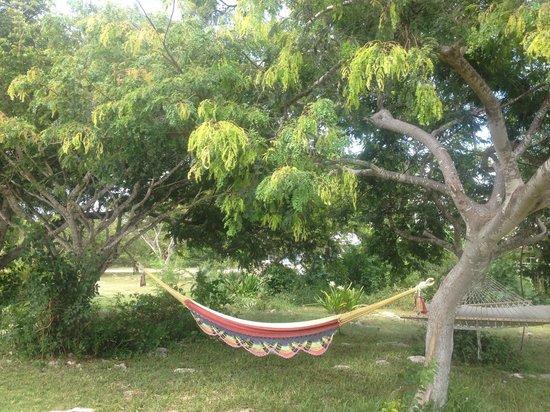 C Shells Guest Quarters: garden hammock