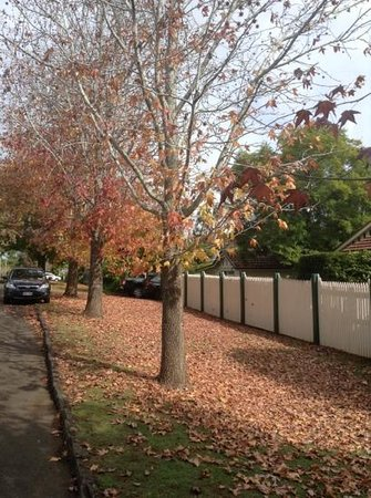 Beccles on Margaret B&B: Autumn leaves street view