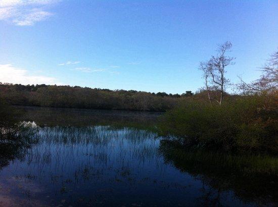 Beech Forest: From beech walk