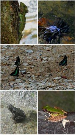 Tanah Aina Farrah Soraya Resort : Some of the li'l creatures we'd encountered..