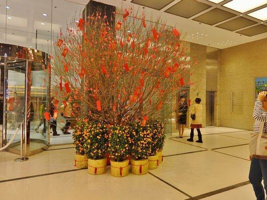Marco Polo Hongkong Hotel : 金柑の木