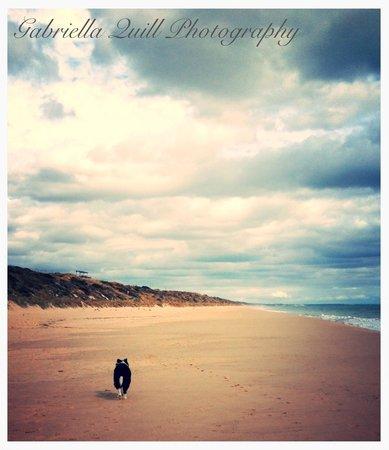 Bunbury Backbeach dog friendly area  - Picture of Back Beach
