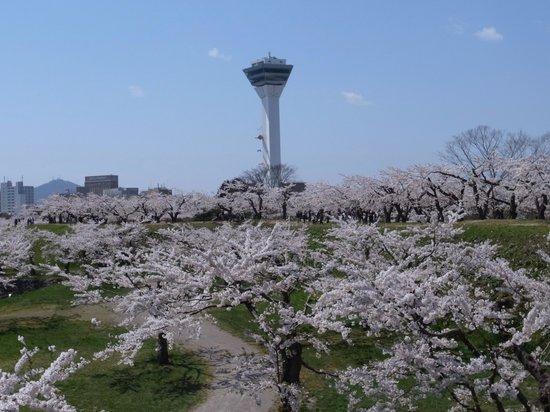 Goryokaku Park : 桜の海と五稜郭タワー