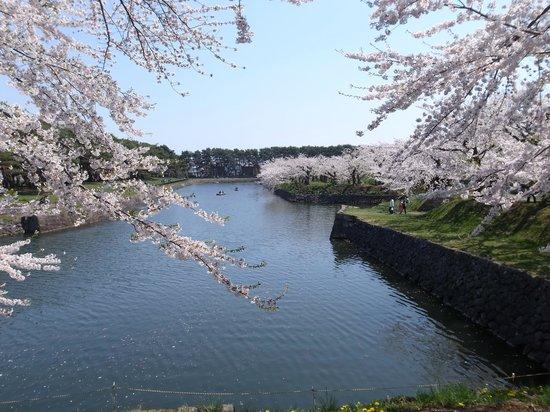 Goryokaku Park : お堀と桜