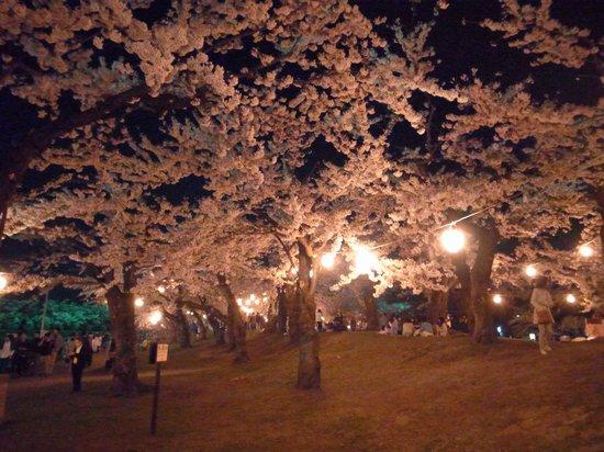 Goryokaku Park : 夜桜
