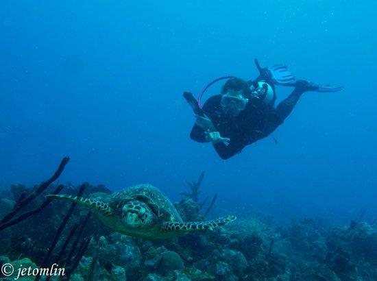 "N2theBlue Scuba Diving: hawksbill turtle at ""Aquarium"" dive site"