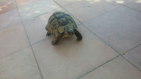 Riad Dar Anika: Turtle joining us for our breakfast :)