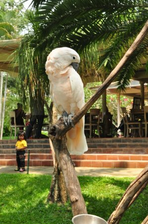 Gianyar, Indonesia: salah satu koleksi burung jenis kakak tua