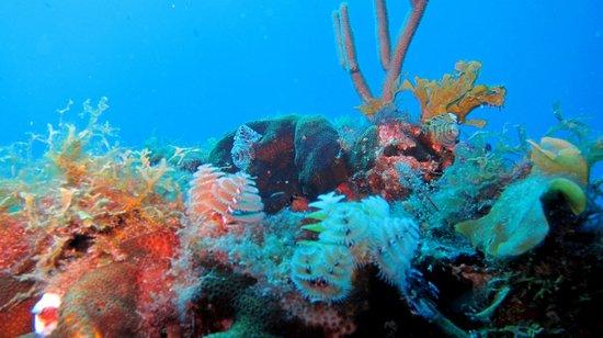 Jupiter Scuba Diving: The Reef
