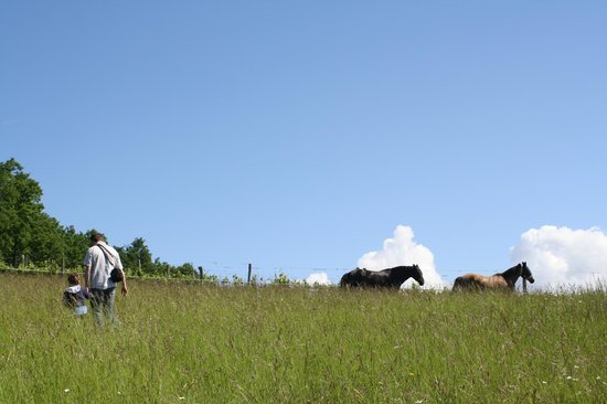 Chateau Lestevenie : Wild Orchid field