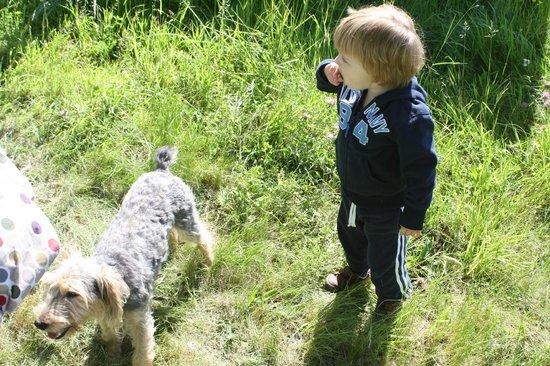 Chateau Lestevenie : Friendly dog Bino