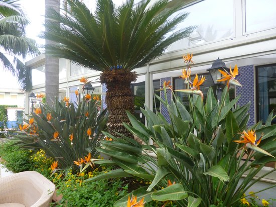 Hotel Caravel Sorrento: Hotel Caravel garden