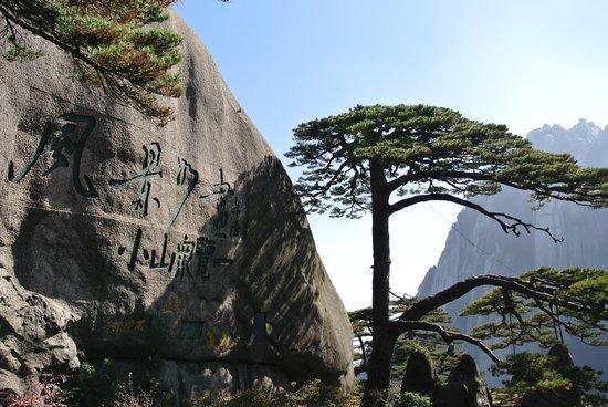 Mt. Huangshan (Yellow Mountain): Дружелюбная сосна