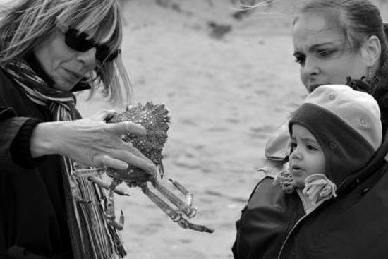 Camping le Sabia : Découverte de l'estran et de sa faune
