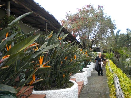 Hotel Parco Maria Terme : giardino