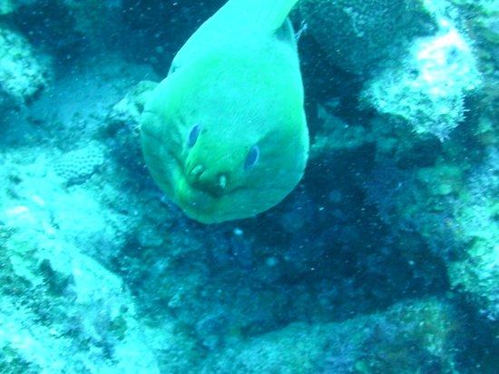 Copamarina Beach Resort & Spa : Diving Buddy