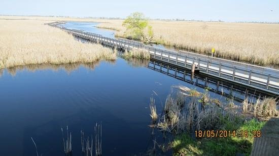 Point Pelee National Park : Point Pelee marshland