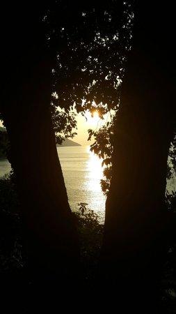 Tree Monkey: Sunset