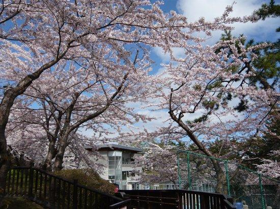 Heiseikan Kaiyotei : 函館のさくら、1