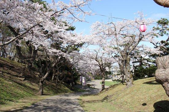 Heiseikan Kaiyotei : 函館のさくら、2