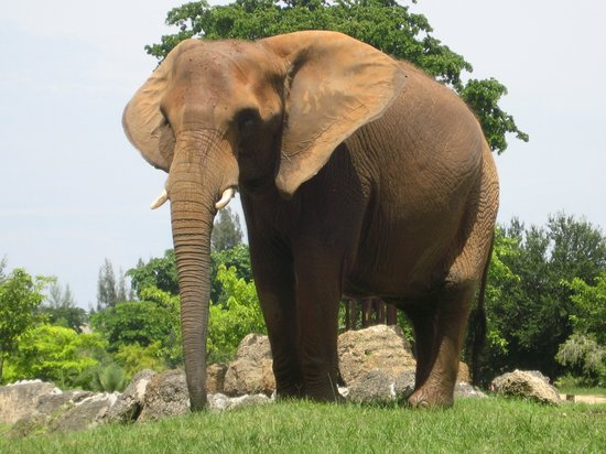Zoo Miami: Beautiful Elephant