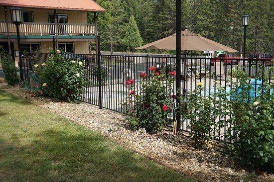 Yosemite Westgate Lodge : Pool