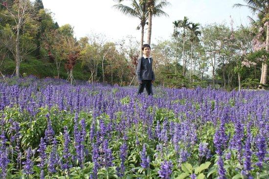 Nanyuan Resort, Lakeview : sea of lavender