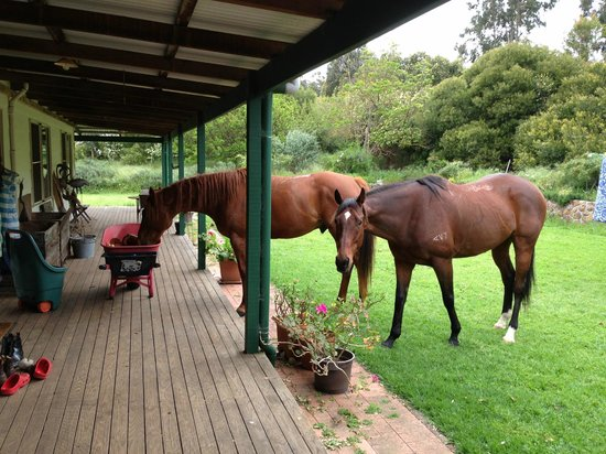Glenlynn Cottages: Jethro (chestnut) & Legsie ( dark bay )