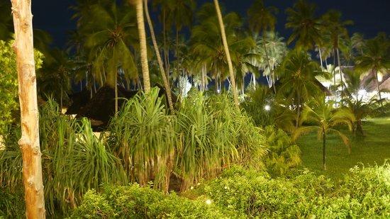 Ocean Paradise Resort & Spa: les cocotiers de l'hotel de nuit