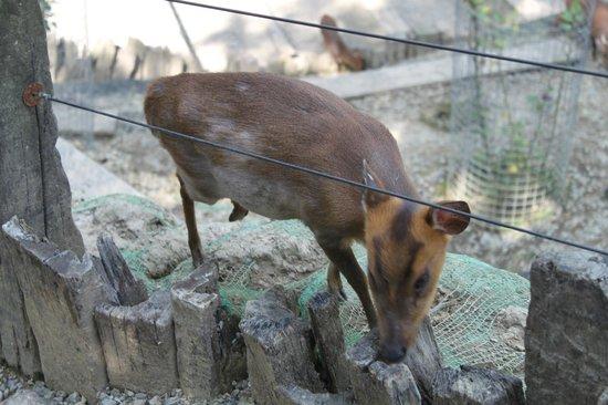 Green World Ecological Farm: lovely animal