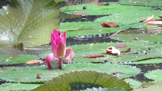Finca Los Monos Botanical Garden: Finca Los Monos