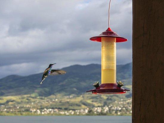 Cabanas del Lago - comedor : Hummingbirds are part of the attractive