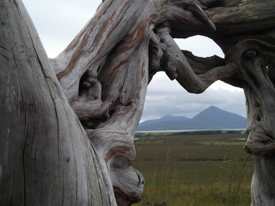 Bog oak sculpture in Ballycroy National Park looking towards Slievemore on Achill Island