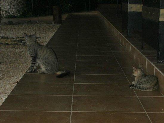 Iberostar Daiquiri: Feral cats, very friendly.