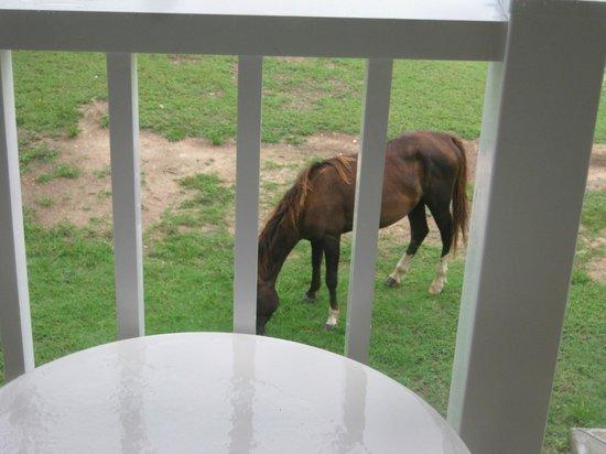 IBEROSTAR Daiquiri: Wild horses every morning outside!