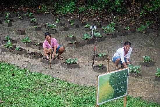 Muyuna Amazon Lodge : Muyuna botanical garden