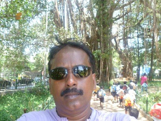 Hanging Gardens (Ferozeshah Mehta)  |  Malabar Hill, Mumba