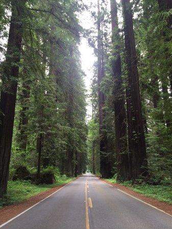 Avenue of the Giants : Beautiful relaxing drive